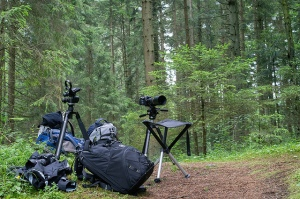 Even wildlife photographers need a break
